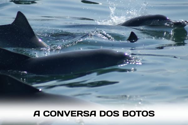 """Imagine ver de perto e ainda ouvir a """"conversa"""" dos botos embaixo d'água? Viva essa incrível experiência aqui."""