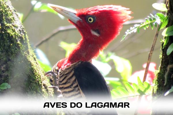 Roteiros especiais para quem quer se iniciar na arte de observar a delicada vida das aves do Lagamar.